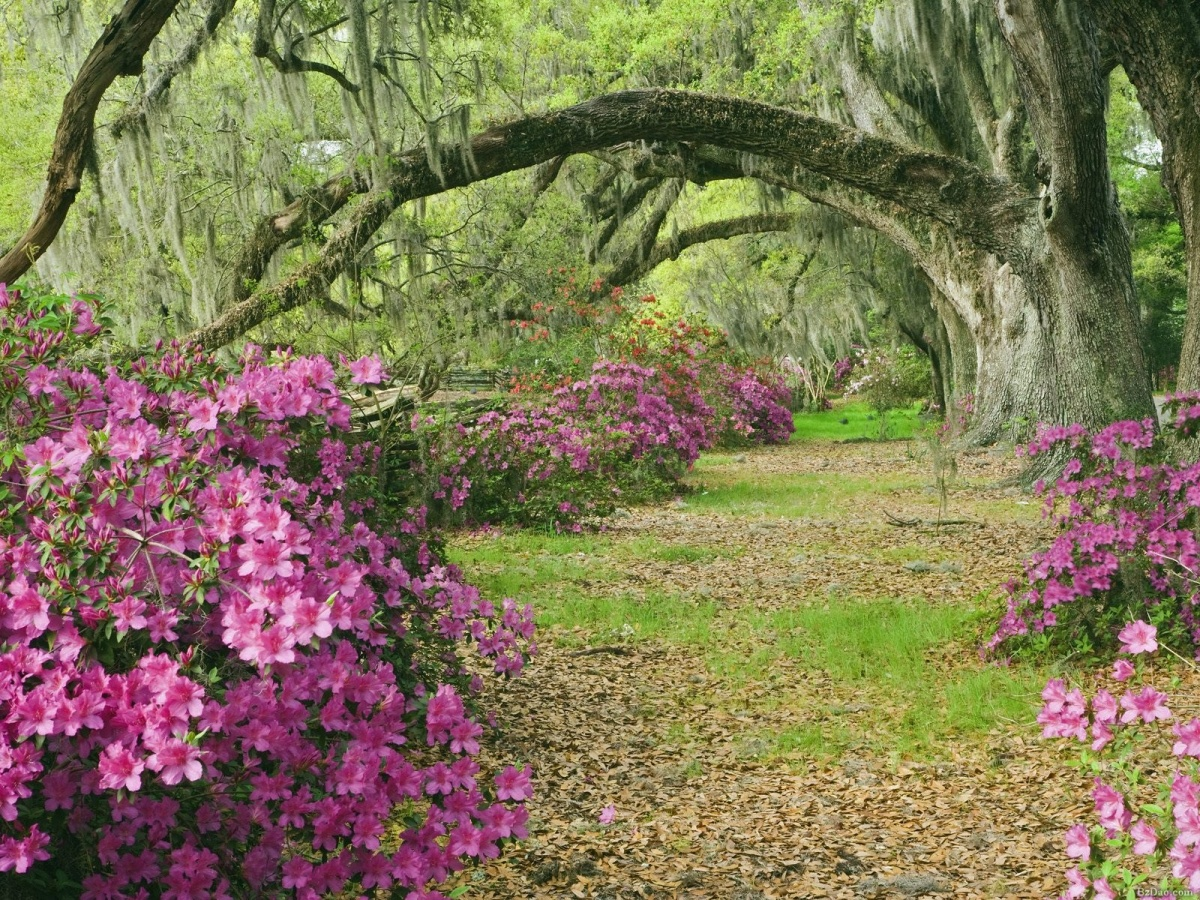 Сад з квітучими азаліями