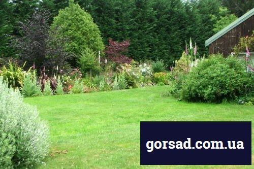 big-back-lawn