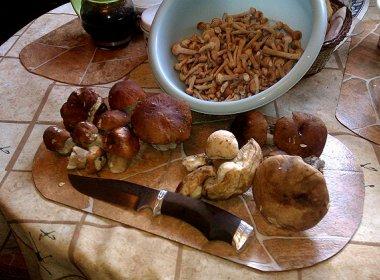 Обробка грибів після збору