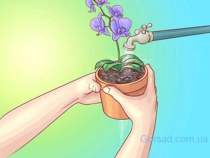 kak-polivat-orhidei