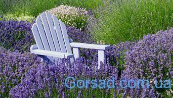 Purple Adirondack chair in field of lavender