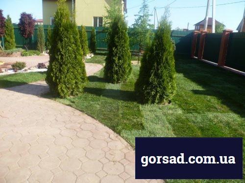 tuya-z.-smaragk-gruppovaya-posadka-500x375.jpg