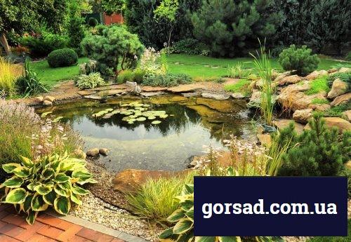water-garden-residential-pond-1
