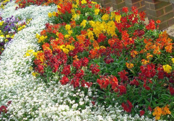 Выразительный прием в оформлении клумб и цветников