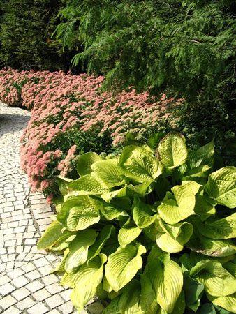 Декоративная зелень в оформлении клумб и цветников