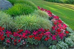 Орнаментальное оформление клумб и цветников