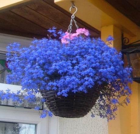восхитительный синий каскад