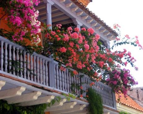 ампельные растения на дачной террасе