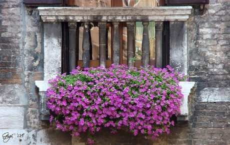 ампельные растения как декор балкона