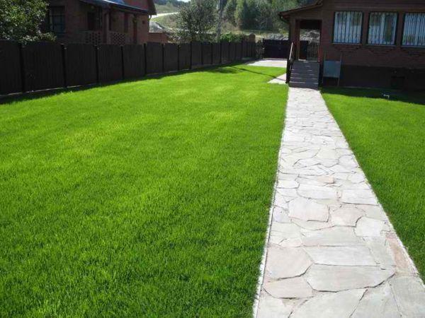 Як доглядати за газоном: необхідні процедури і сезонні роботи