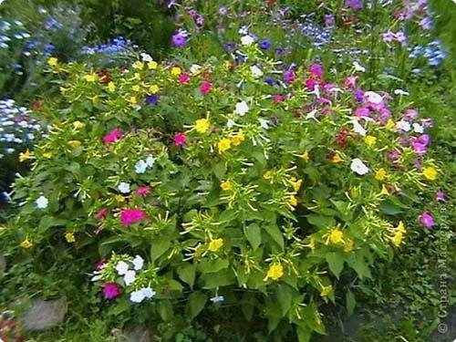 Разноокрашенные цветки