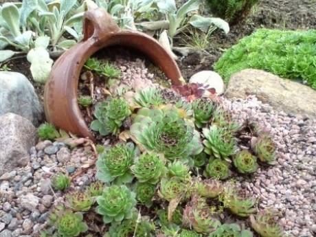 миниатюрный альпинарий на загородном участке