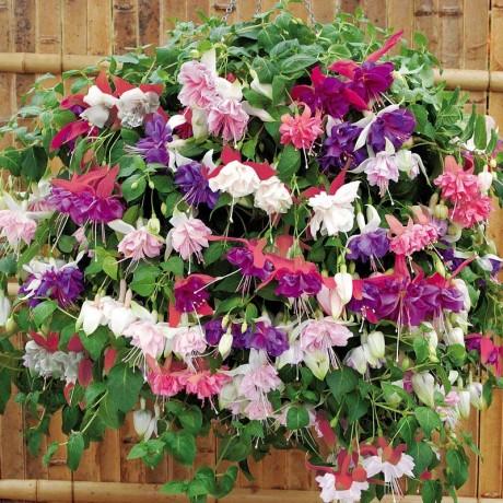 ампельные растения украшают ограду