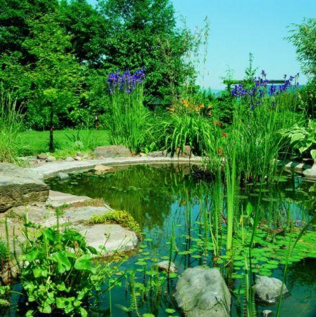 Правильное расположение облагороженного природного водоема на даче