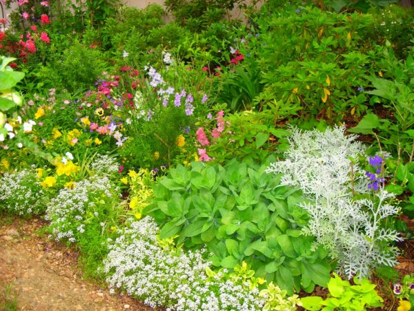 Микс цветов и зелени разной тональности в декоре клумбы