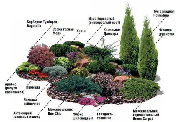 Расположение растений в альпинарии