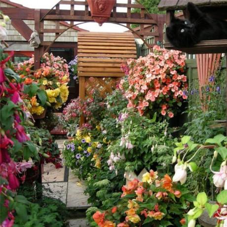 универсальные ампельные растения
