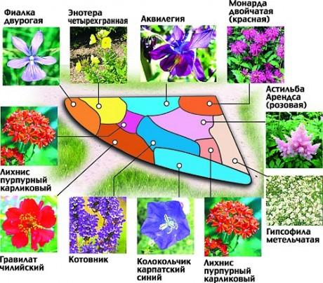 Схема цветника