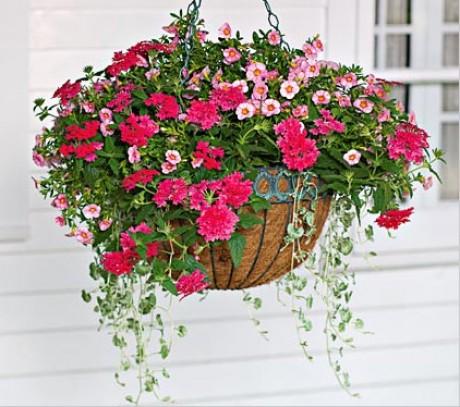 ампельные растения в подвесном кашпо