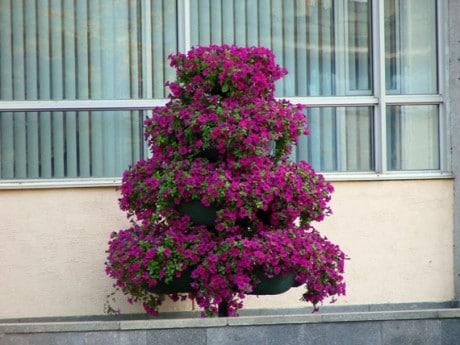 ампельные растения в декоре фасада