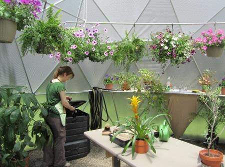 растения в куполе