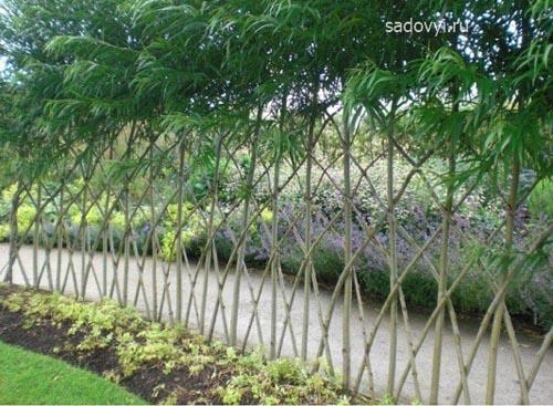 Ивовый забор