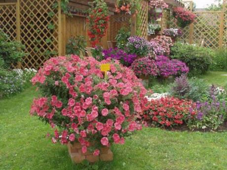 ампельные растения в дачном дворике
