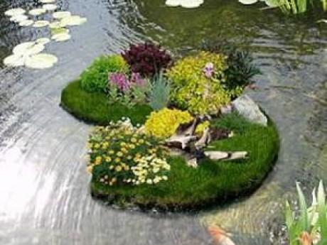 цветущий островок на приусадебном участке