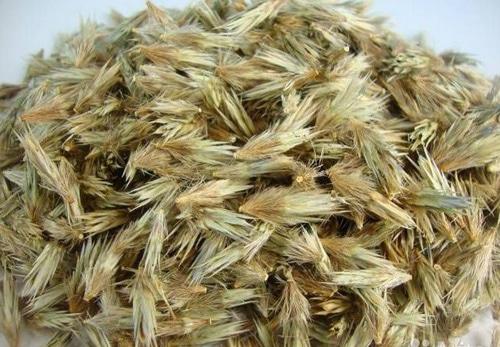 Семена для размножения мордовника