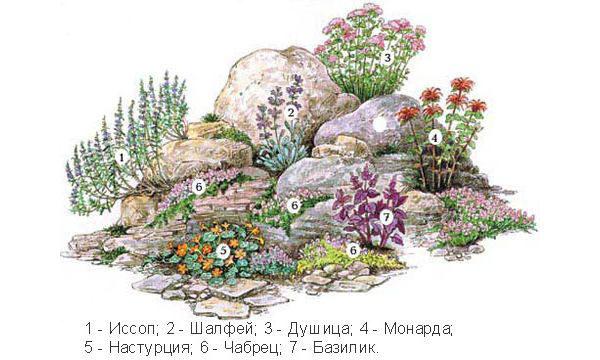 Набор растений для альпинария